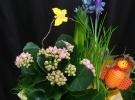 Cosuri cu plante_66