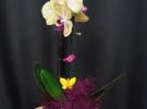 Cosuri cu plante_68