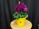 Cosuri cu plante_71