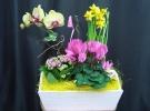 Cosuri cu plante_72