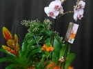 Cosuri cu plante_73