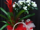 Cosuri cu plante_76