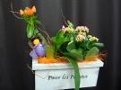 Cosuri cu plante_78
