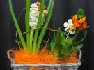 Cosuri cu plante_79