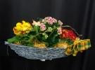 Cosuri cu plante_80