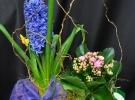 Cosuri cu plante_81