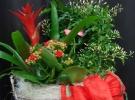 Cosuri cu plante_82