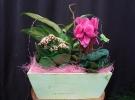 Cosuri cu plante_84