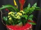 Cosuri cu plante_85
