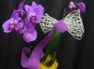 Cosuri cu plante_88